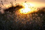 Warm_grasses_by_dcsearle.t21